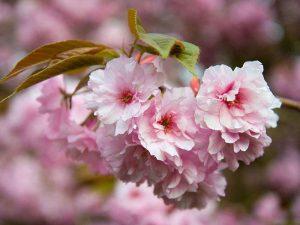 Wir pflegen Ihre Haut zart und wunderschön - wie Frühlingsblumen
