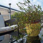 Lebendiges Grün schmückt unsere Terrasse